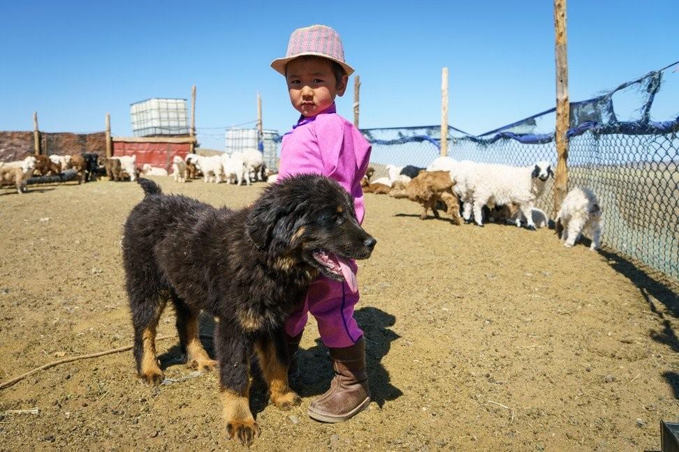 Баяраа хүү Хоньч дуудлагатай банхар гөлгийнхөө хамт зогсож байгаа нь