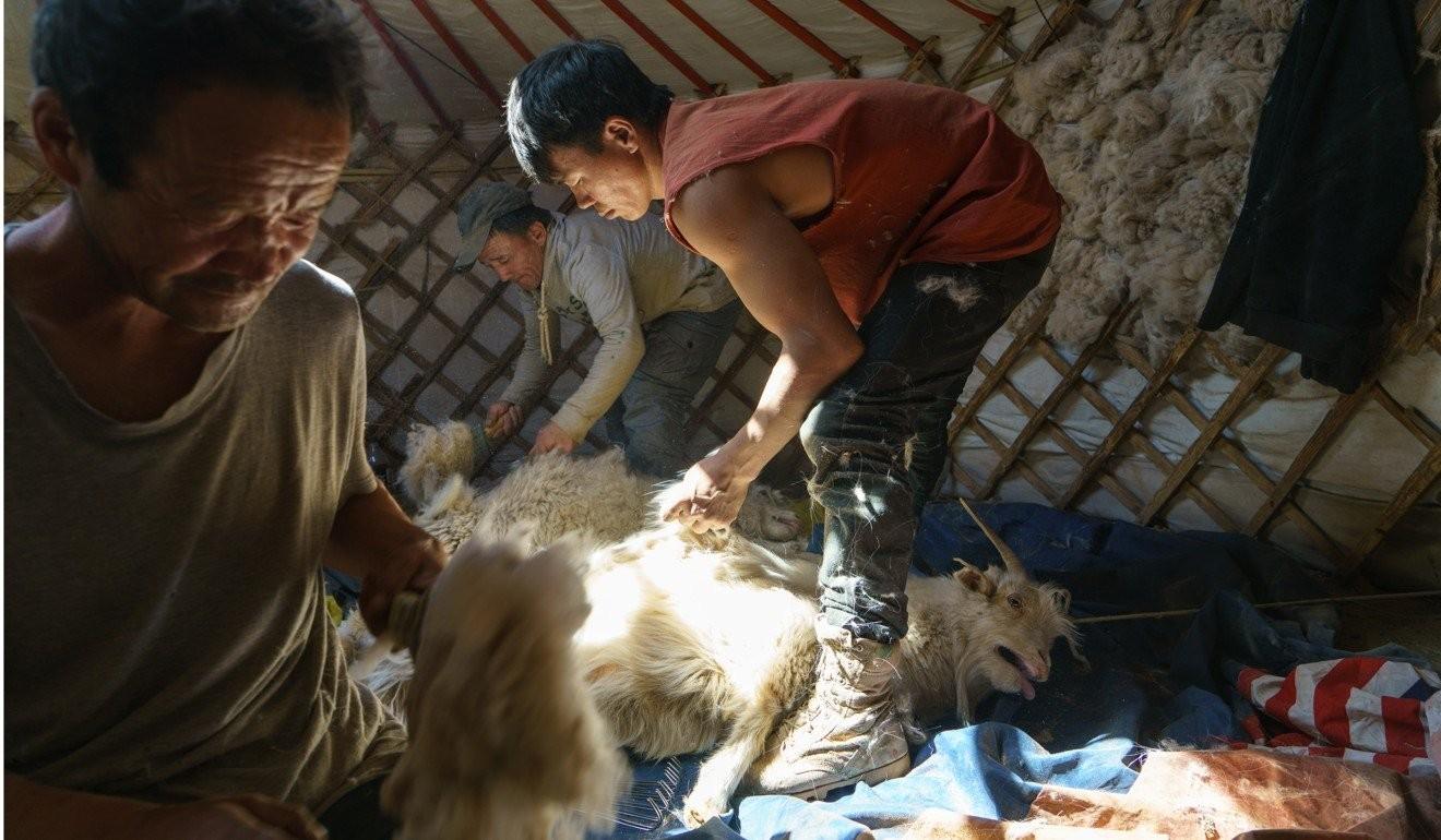 Малчин Д.Баясгалбадрах болон түүний гэр бүлийнхэн ямааныхаа ноолуурыг самнаж байгаа нь.