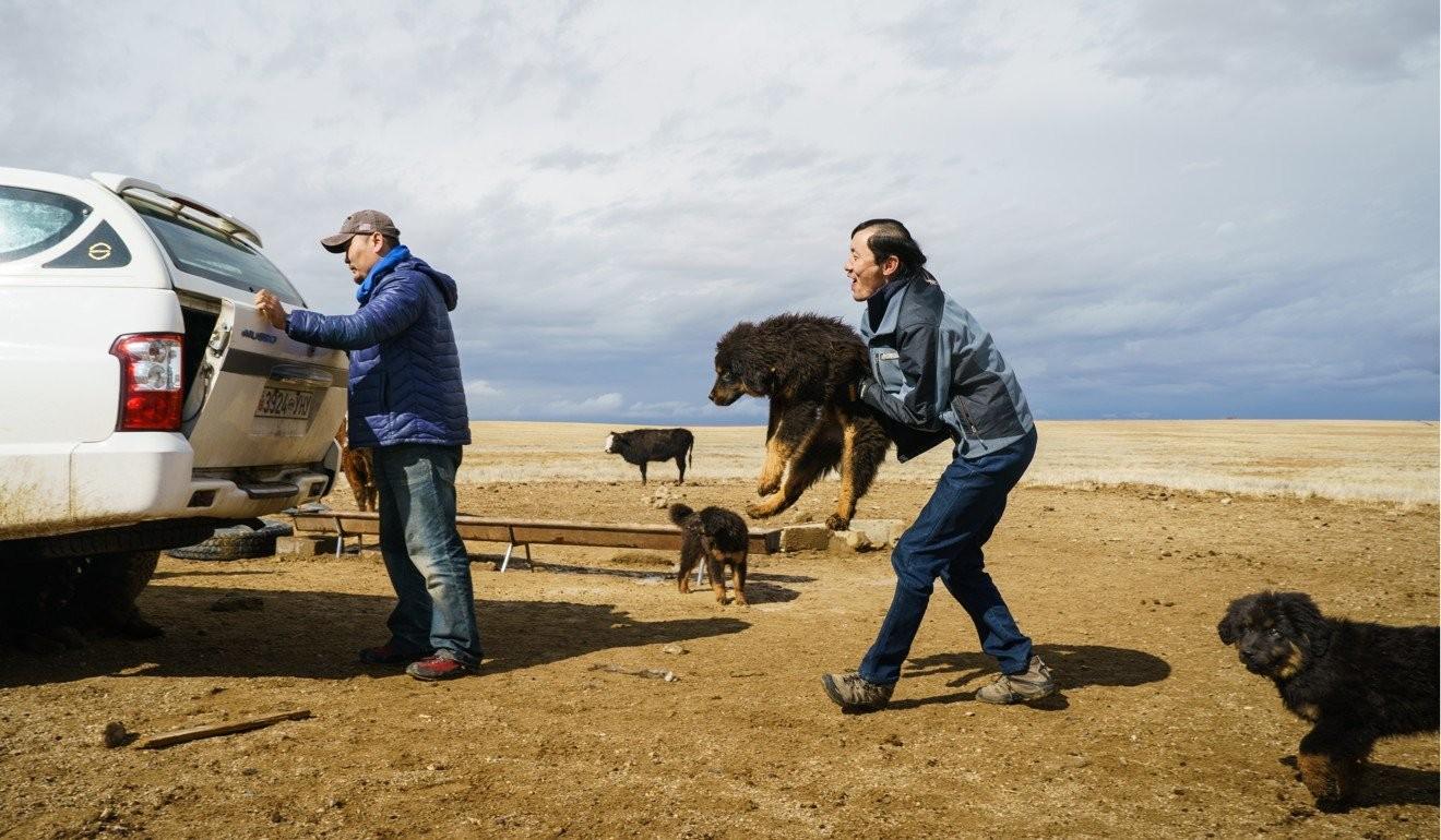 Өмнөговийн бүс нутагт Монголын Банхар Нохой Төслийн Багийн гишүүд болох (зүүн талаас) Т.Батбаатар, С.Соёлболд нар гөлөгнүүдээ ундаалахаар зам зуур зогссон мөч.
