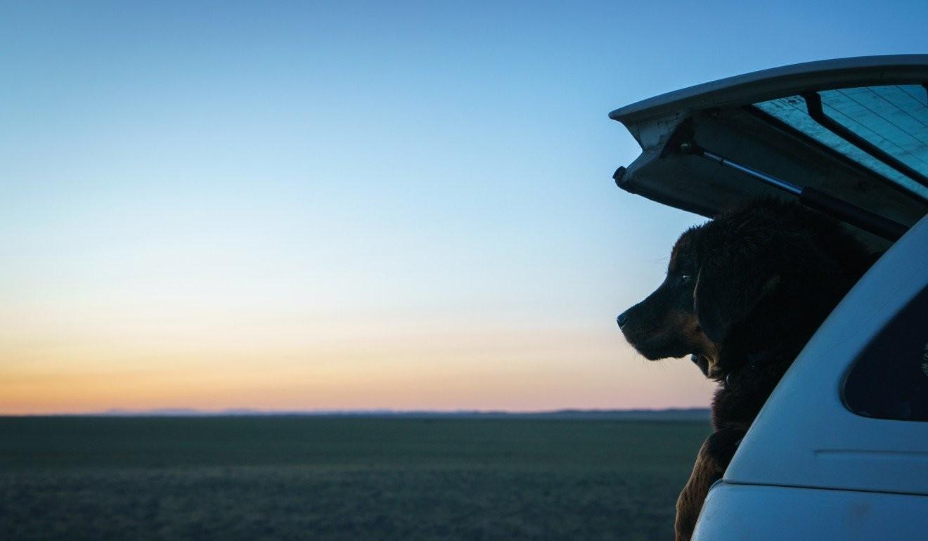 Банхрын гөлөг Монголын Өмнөговь аймагт байгалийн сайхныг ажин сууна.